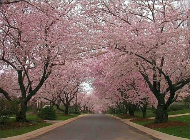 13 Spots to View Cherry Blossoms -- When You're Trying to Avoid the Tidal Basin Crowds