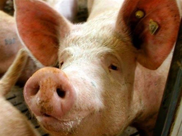 [HLTHO] Swine Flu: Fact or Fiction