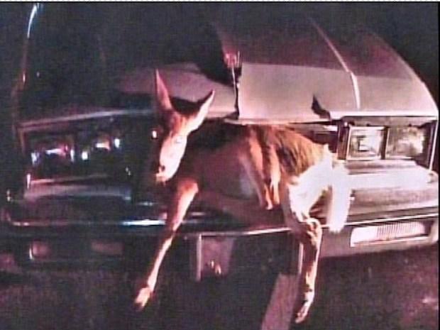 [PHI] The Deer Hunter