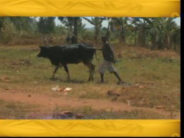 [DC] Scars Remain Beneath Rwanda's Beautiful Landscape