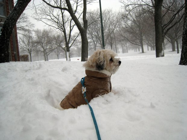 Blizzard 2011: Animals in the Snow