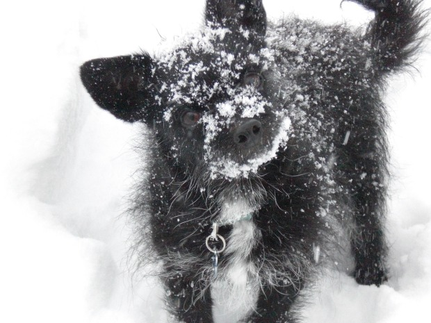 iSee: The Best Snowstorm Pix, Part 2