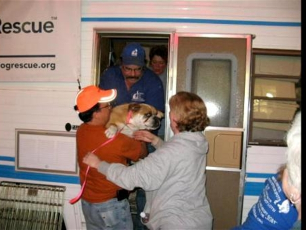 [DC] Puppy Mill Refugees in Rehab