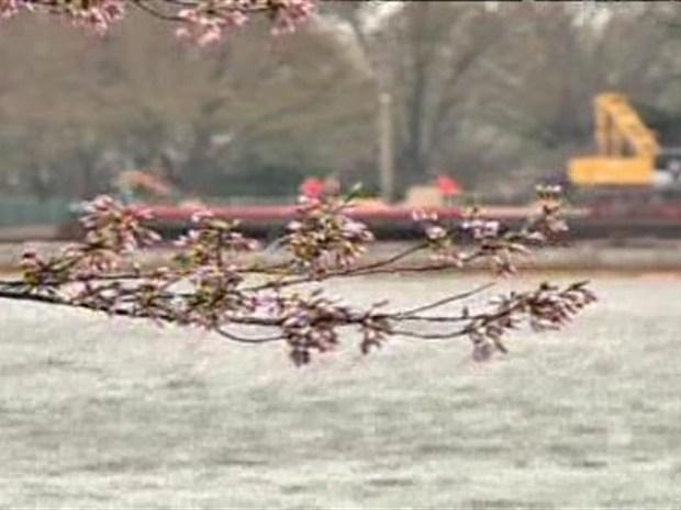 [DC] Cherry Blossom Boost