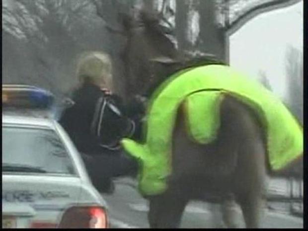 [CHI] Runaway Horse Nabbed