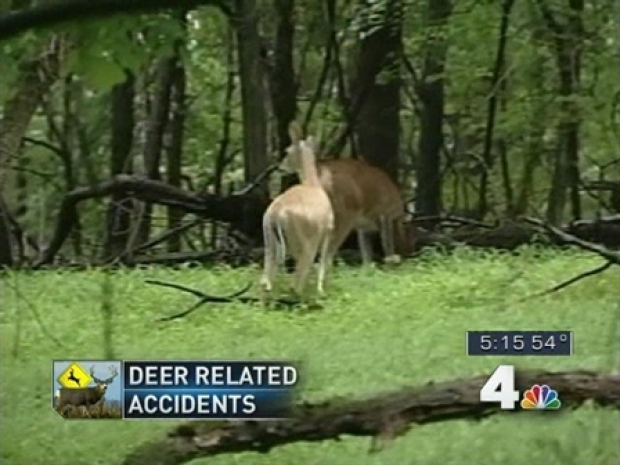 [DC] Mating Season Means More Accidents Involving Deer