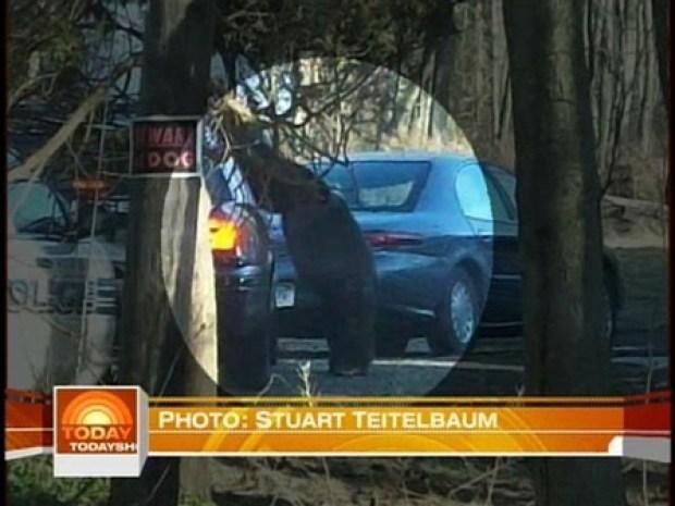 [HAR] Chimpanzee Attacks in Stamford