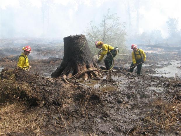 Great Dismal Swamp Fire Scene