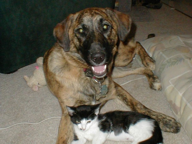 [BAY] FDA Dog Treat Warning: Necropsy Results on Bay Area Dog