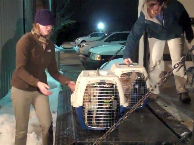 [LA] Raw Video: Chihuahuas Arrive in Colorado