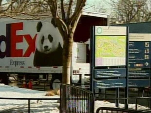 [DC] Tai Shan Shipped Panda Express