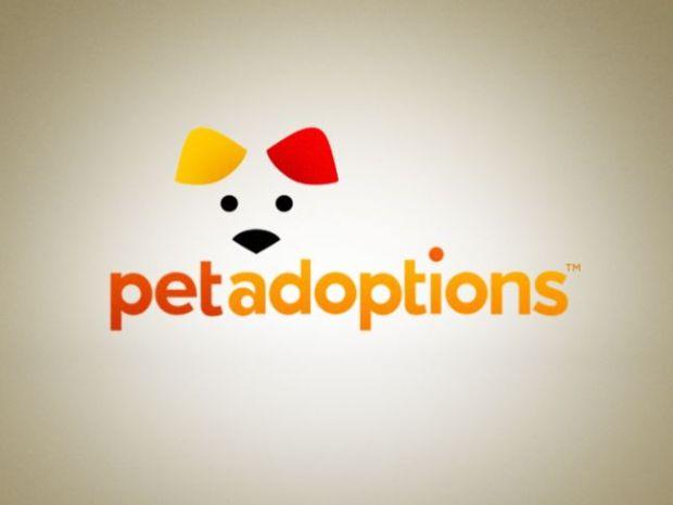 "[DC] Pet Adoptions: ""Dale"""