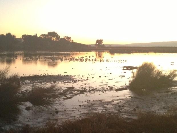 "[BAY] ""It Is Going to Smell"": Massive Poop Scoop Set After Avian Cholera Kills 200 Ducks"