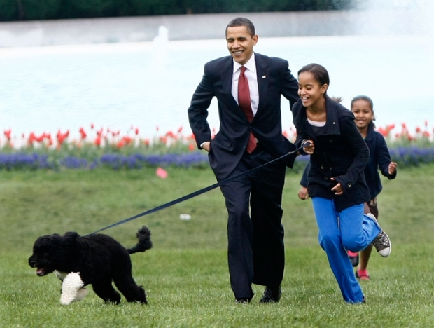 Bo Obama Turns One