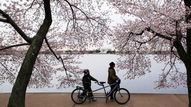 2011 Cherry Blossom Scrapbook