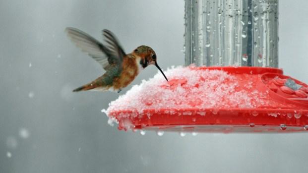 Snow Hits D.C., Suburbs