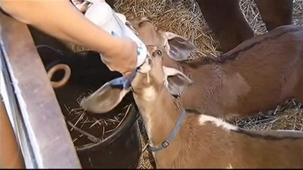 [DC] More Animal Attacks in Herndon