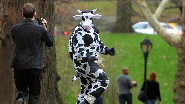 [DC] Man Steals Milk in Cow Costume