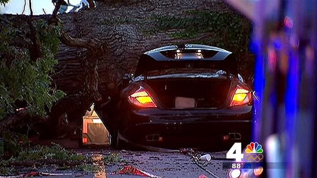 [DC] Huge Tree Falls and Kills Driver, Crushes Car