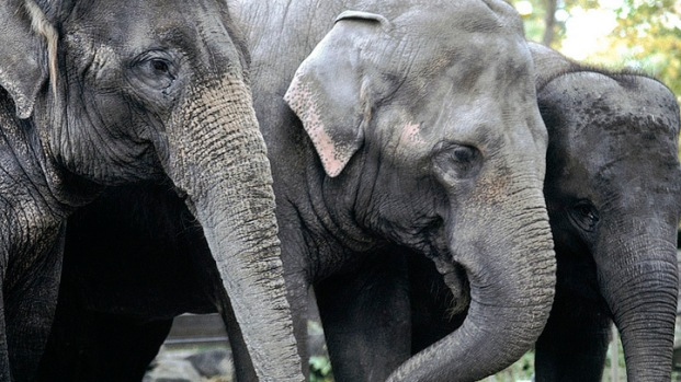 Three New Elephants Headed to National Zoo