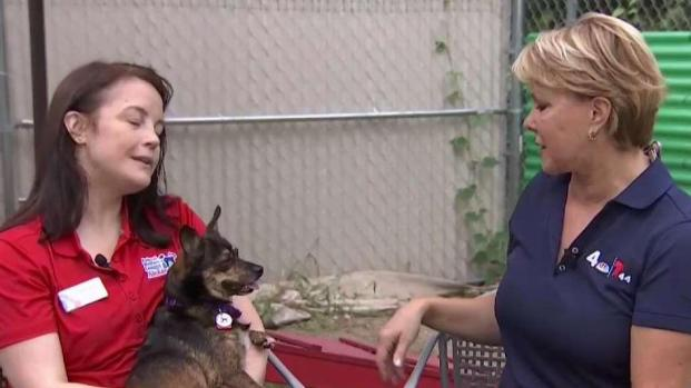 [DC] Alexandria Shelters Finds Homes for Rural Animals in Need
