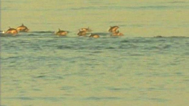 [DGO] Dolphins Off Pacific Beach: Nature Break