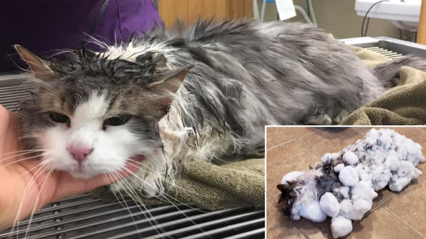 [NATL] Unbelievable Animal Stories: Frozen Cat Makes Miraculous Recovery