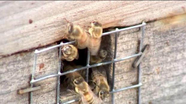 [DC] Busy Bees Make Honey for Gaylord National Resort