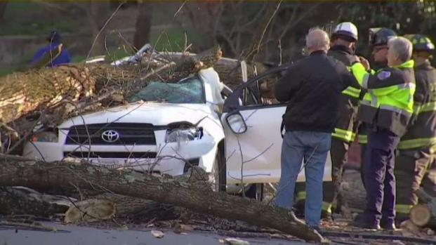 Man Seriously Hurt When Tree Limb Falls on SUV