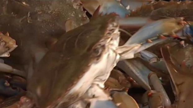 [DC] New Crab Population Numbers Could Mean Higher Prices