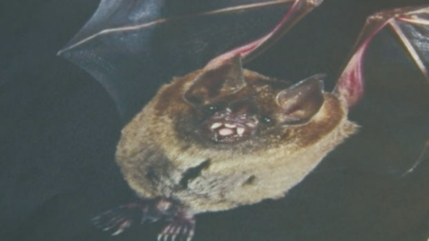 [NATL] What to Do if You're Bitten By a Bat