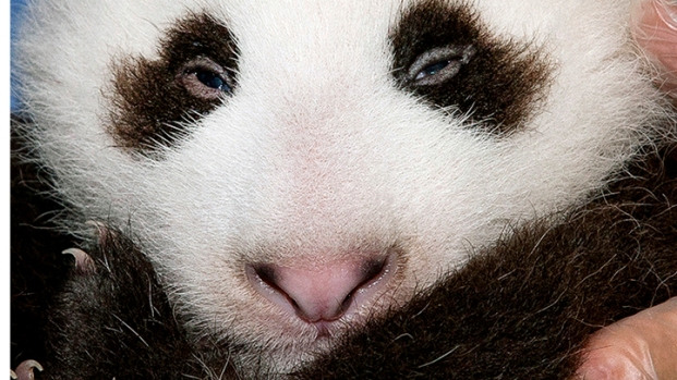 [DGO] Zoo Panda Gets a Name