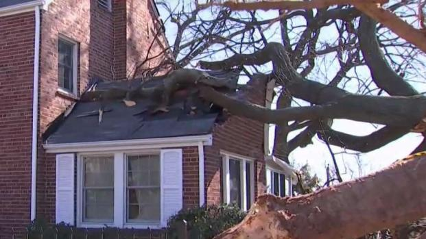 [DC] Strong Winds Cause Widespread Damage
