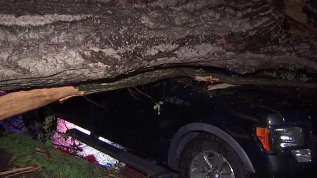 Tornado Brings Down Trees in Reston