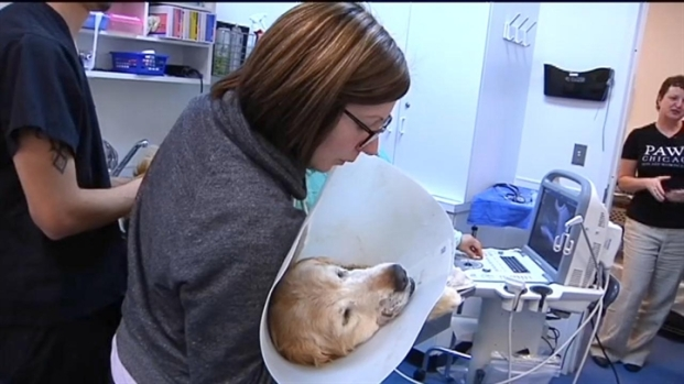 [CHI] Oklahoma Pets Head for Chicago
