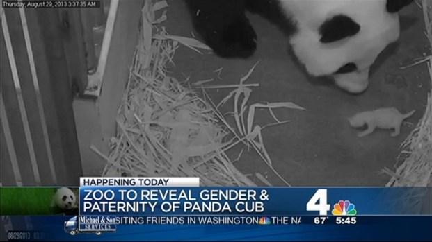 [DC] Zoo to Reveal Panda Cub's Gender, Paternity