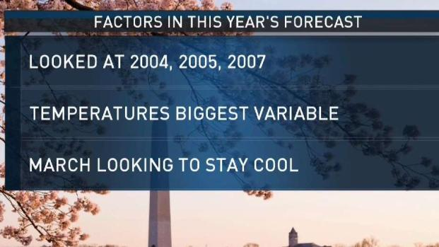 How the Forecast Suggests the DC Cherry Blossoms' Peak Bloom