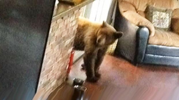 [NATL-V-LA] Bears Leave Monrovia Home in Shambles