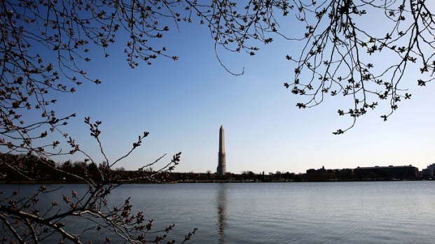 Cherry Blossoms Make Their Long-Awaited 2013 Debut