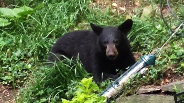 Black Bear Captured in D.C.