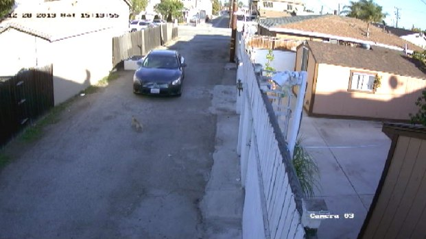 [LA] Police: Video Shows Driver Intentionally Run Down Dog