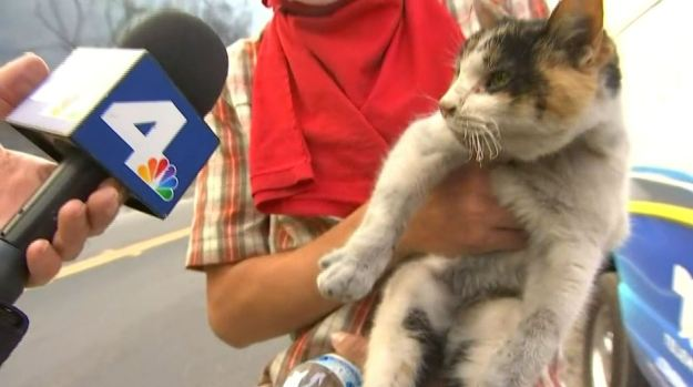 [NATL-LA] 'I Found a Little Kitty': Cat Rescued During Thomas Fire in Ventura