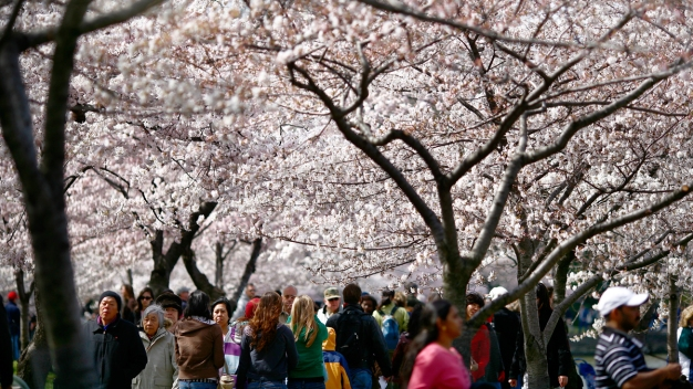 9 Cherry Blossom Events You Won't Want to Miss