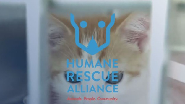 DC's Animal Rescue Groups Unite Under One Name