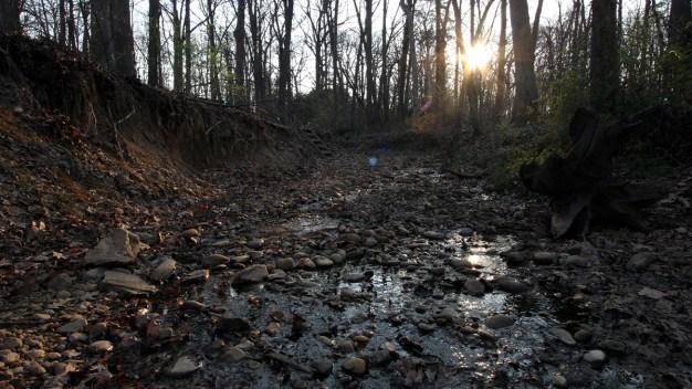 Human Skull, Bones Discovered Near Arlington Creek: Police