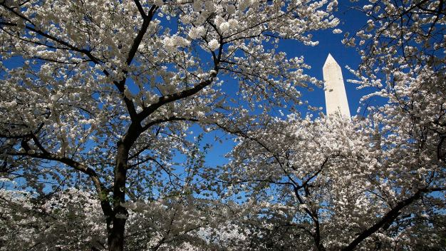 Cherry Blossom Festival: 8 Key Events