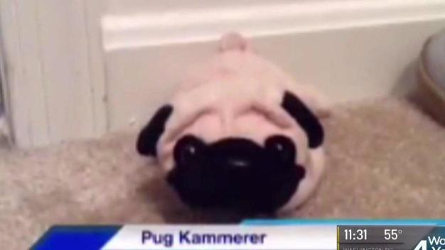 Virginia Girl Hopes 'Pug Kammerer' Can Help Her Get a Puppy