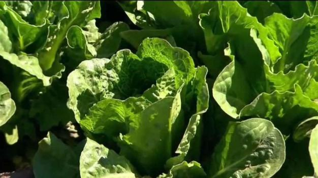 7 Maryland E. Coli Patients Ate Salad Sold at Sam's Club<br /><br />