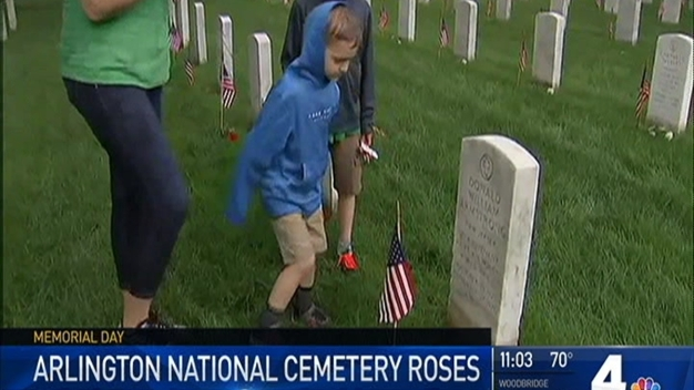 Roses Placed on Graves at Arlington National Cemetery