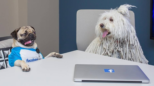 Internet's Favorite Dogs Meet for Power Lunch at Facebook Headquarters
